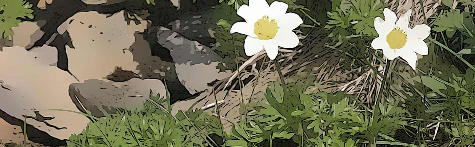 Flora e Fauna del Monte Baldo